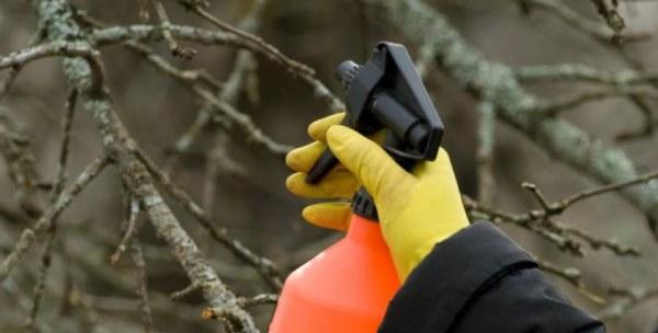 дезинфекция деревьев