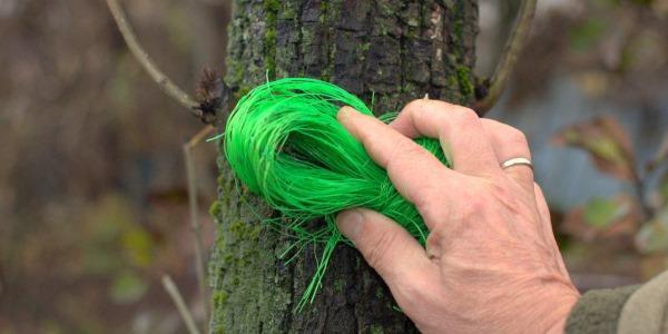 очистка дерева фото