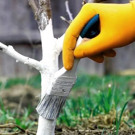 купить краску для деревьев